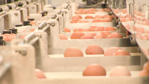 Fresh egg processing at Glenrath Farms.
